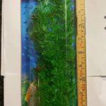 Hailea Plastväxt 2 ca 30cm