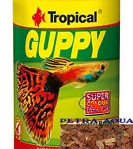 Tropical / Guppy