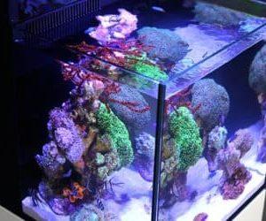 Max Nano har ett unikt utseende tack vare ramlös design och matchande skåp, är utrustad med kraftfulla och programmerbar ReefLed 50 belysning, har en inbyggd proteinskummare och cirkulationspump.Nano Max Komplett Reef System vit med möbel
