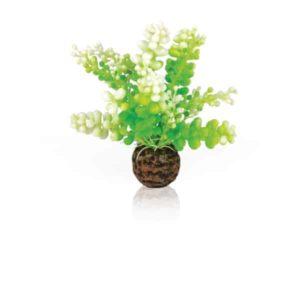 biOrb Aquatic Caulerpa green
